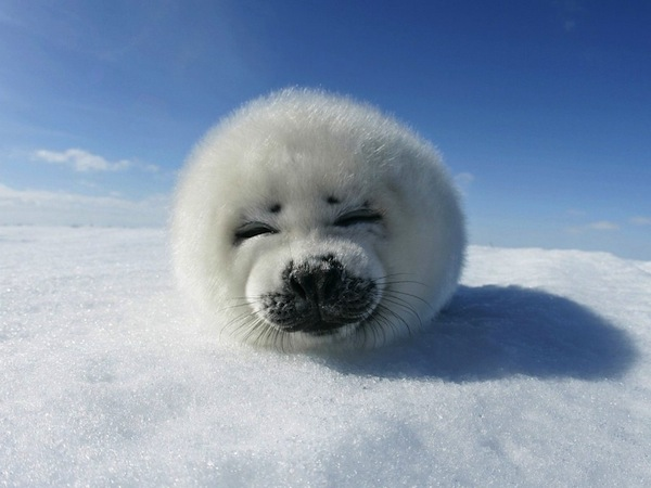 A real deal seal