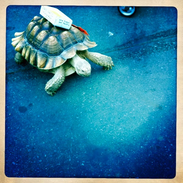 Turtles and Candles: A New Folklore in the Making?