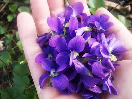 Violets for Margie.