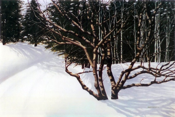 "Cape Cod Cherry,"" Oil on Canvas, 24"" X 36"" (2005)."