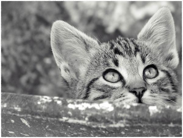 Strongyli Kittens XXII