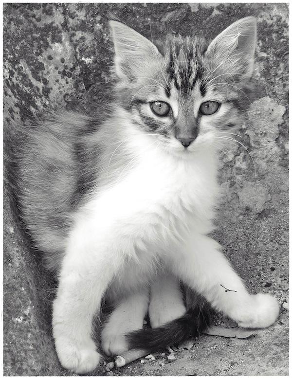 Strongyli Kittens XXIII
