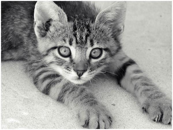 Strongyli Kittens XXVI