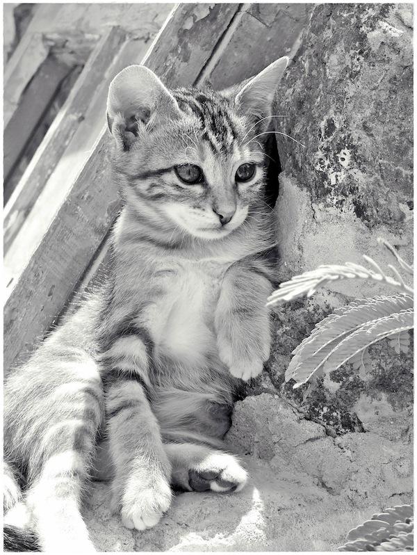 Strongyli Kittens XXVII