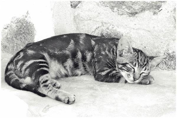 Strongyli Kittens XXVIII