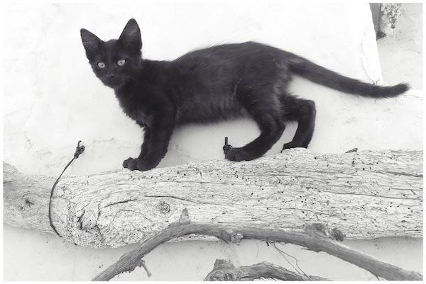 Strongyli Kittens L