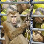 All primate values are fairly rigid.