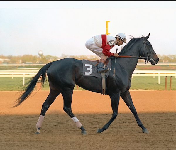 Ruffian, winner of every race in which she ran except the last, when she was injured, and had to be euthanized.