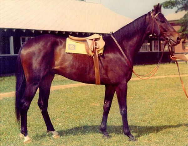 Tim Tam, winner of the 1958 Kentucky Derby and Preakness.