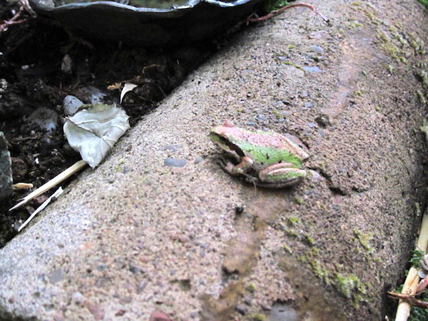Either frog or leaf (or both).
