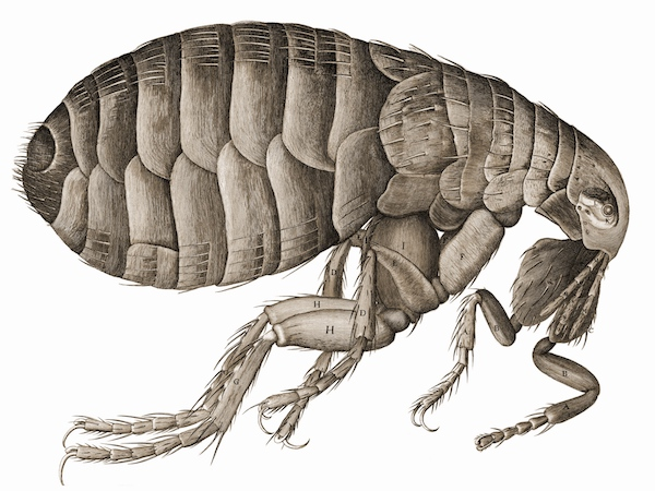 """So, naturalists observe, a flea/Has smaller fleas that on him prey;/And these have smaller still to bite 'em,/And so proceed ad infinitum."""