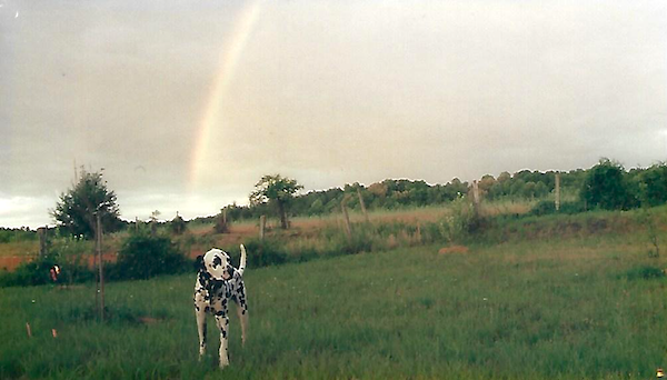Ouzo, at the end of his rainbow.