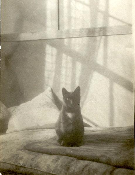 Ghost cat.
